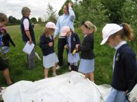 Pond Dipping & Meadow Sweeps